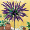 Buddleia Nanho Blue (Std)